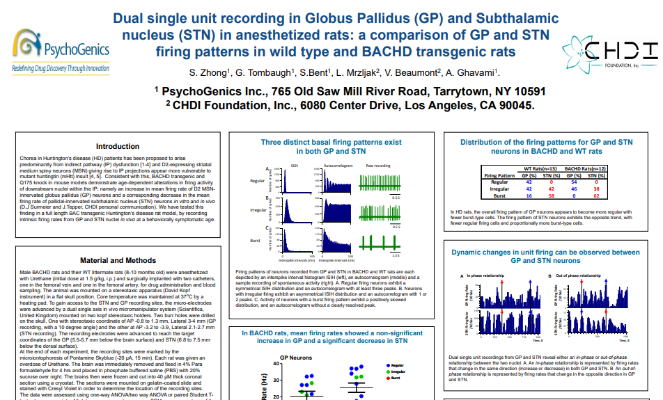 Dual single unit recording in Globus Pallidus (GP) and Subthalamic nucleus (STN) in anesthetized rats: a comparison of GP and STN firing patterns in wild type and BACHD transgenic rats.