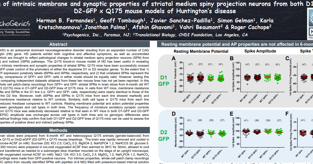 Comparison of intrinsic membrane and synaptic properties of striatal medium spiny projection neurons from both D1-GFP and D2-GFP x Q175 mouse models of Huntington's disease.