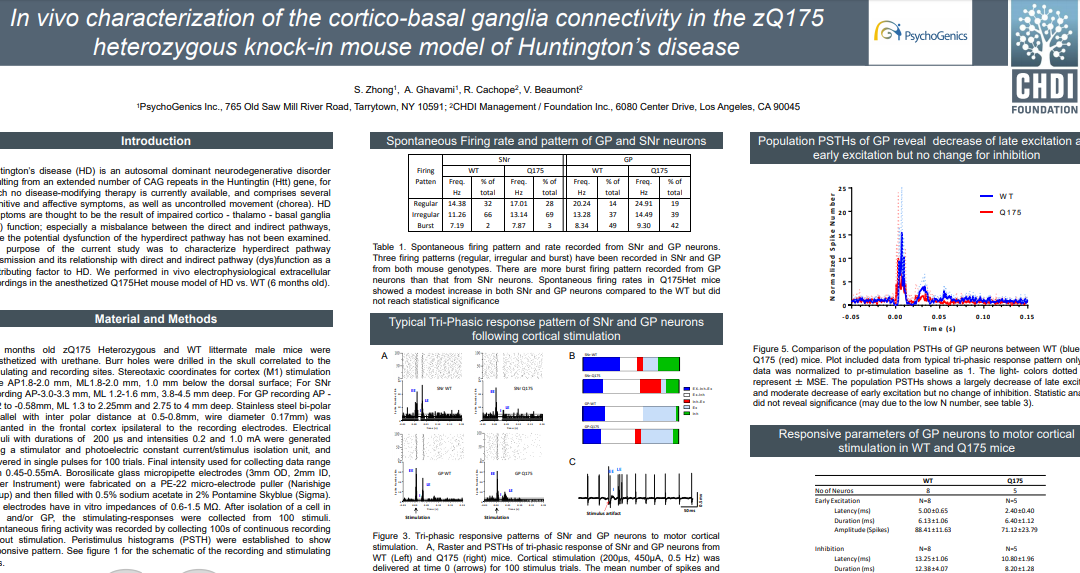 In vivo characterization of the cortico-basal ganglia connectivity in the zQ175 heterozygous knock-in mouse model of Huntington's disease